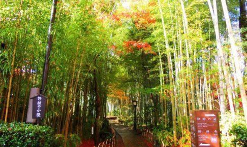伊豆 竹林の小径(修善寺)