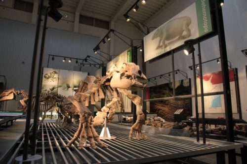 足寄動物化石博物館 北海道足寄町