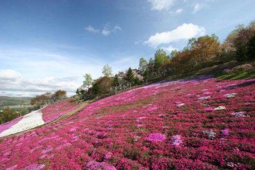 足寄の芝桜 北海道足寄町